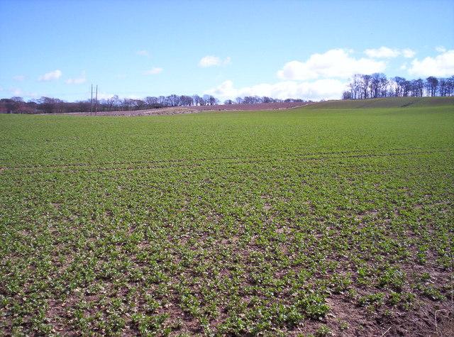 Field near Idvies