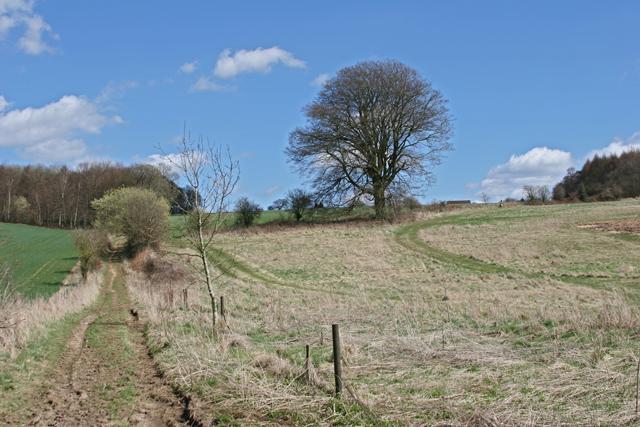 Tree on field boundary