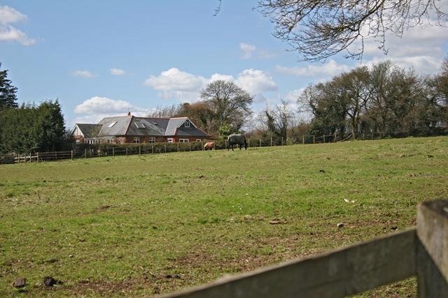 Pasture near Gilbert Street