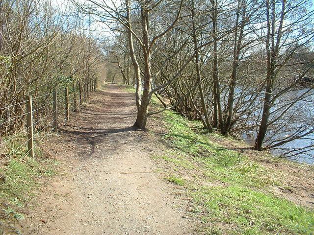Clyde Walkway by Maudslie Wood