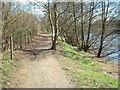 NS8051 : Clyde Walkway by Maudslie Wood by Chris Wimbush
