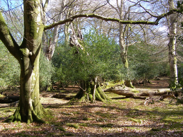 Eyeworth Wood, New Forest