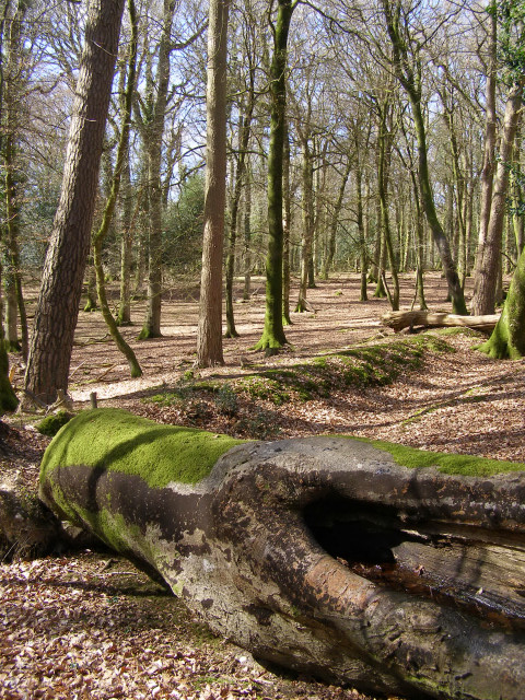 Boundary between Studley Wood and the Islands Thorns Inclosure, New Forest