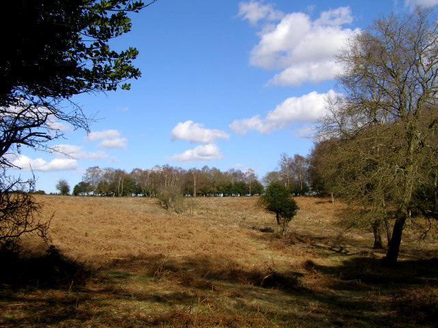 View from Picket Corner to Studley Head, New Forest