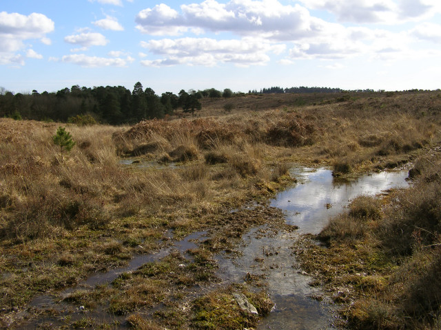 Heathland mire west of Islands Thorns Inclosure, New Forest