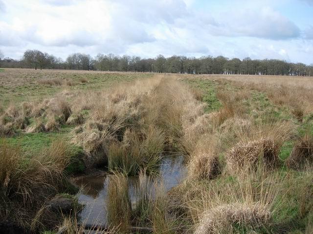 Small stream in Richmond Park