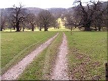 SO3442 : Moccas Deer Park by Stuart Wilding