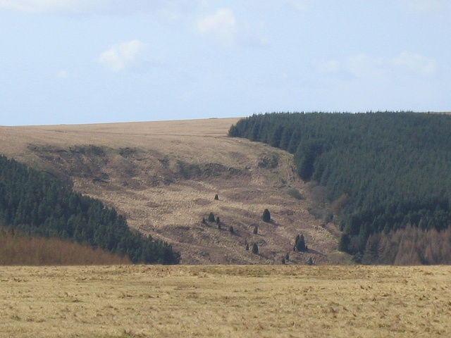 Forests on south slope of Cwm Cathan