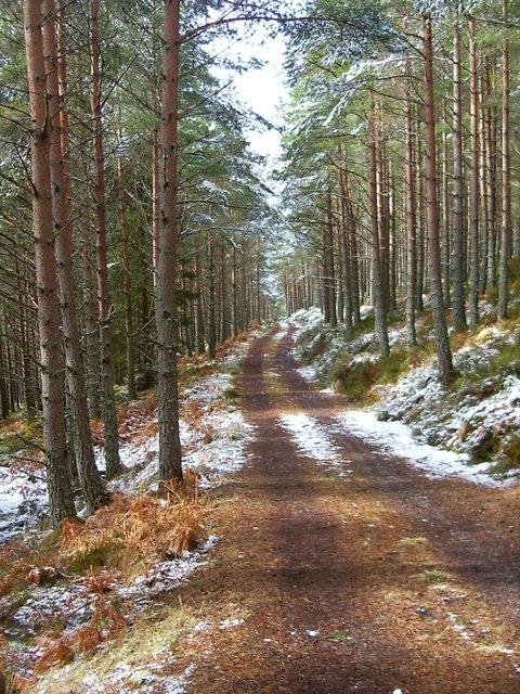 Forest road on Carn na Loinne