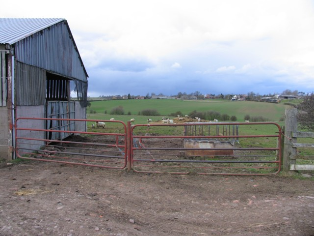 Barn and sheep