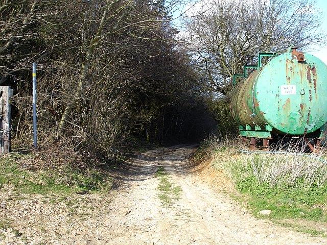 Into Longton Wood