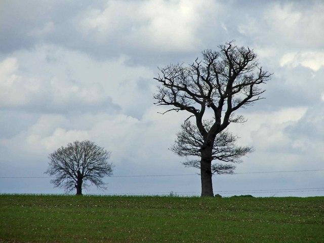 Farmland, Sloeman's Farm, Whitewebbs Lane, Enfield