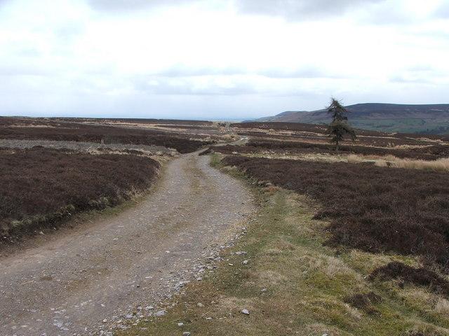 Shooters road on Melmerby Moor.