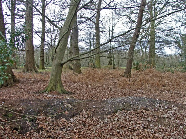 Woodland south of Coopers Lane Road, Hertfordshire