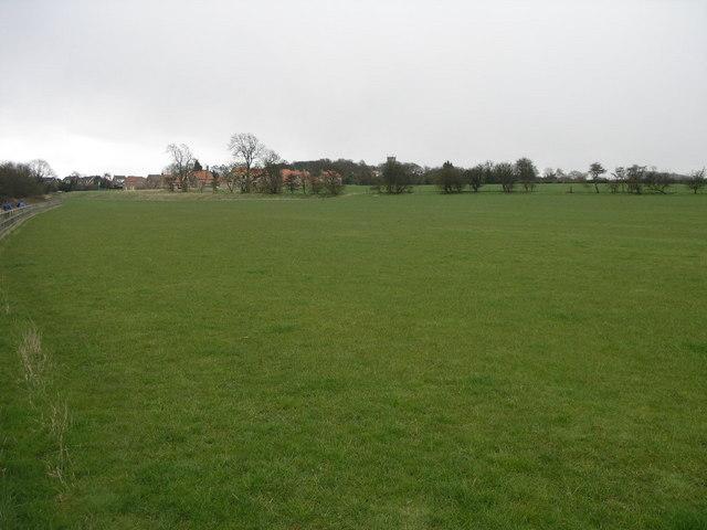 Big Grass Field