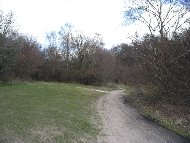 Wayfarer's Walk in Lower Abbotstone Wood