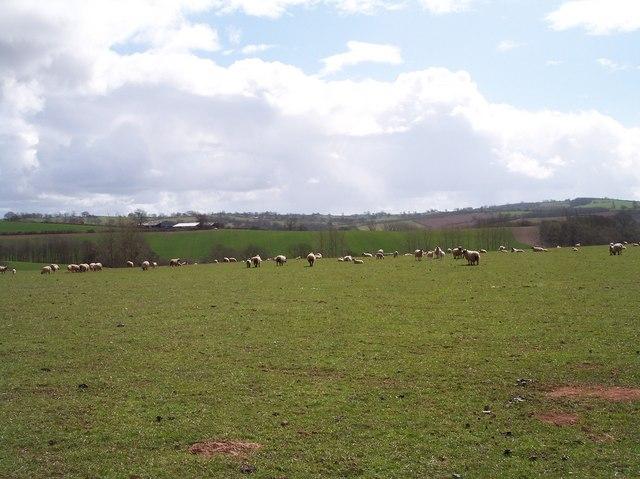Sheep Pasture, Buckland