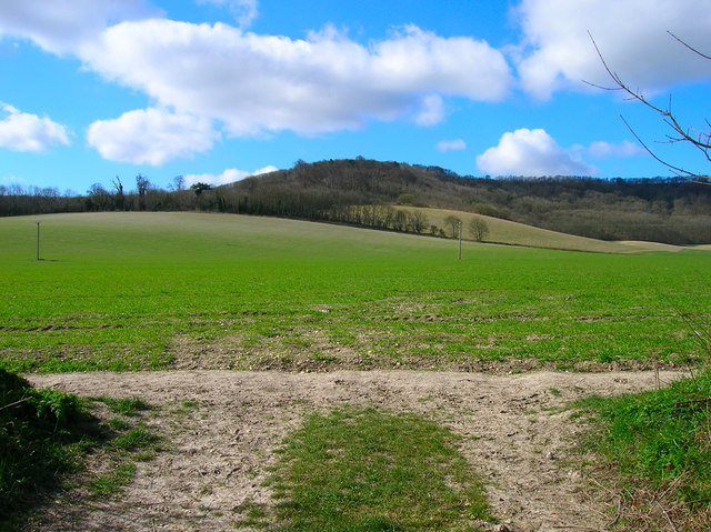 Field from Mouse Lane