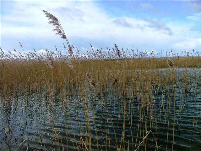 East Chevington Nature Reserve