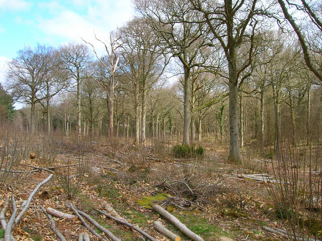 Coppicing, Brickyard Copse