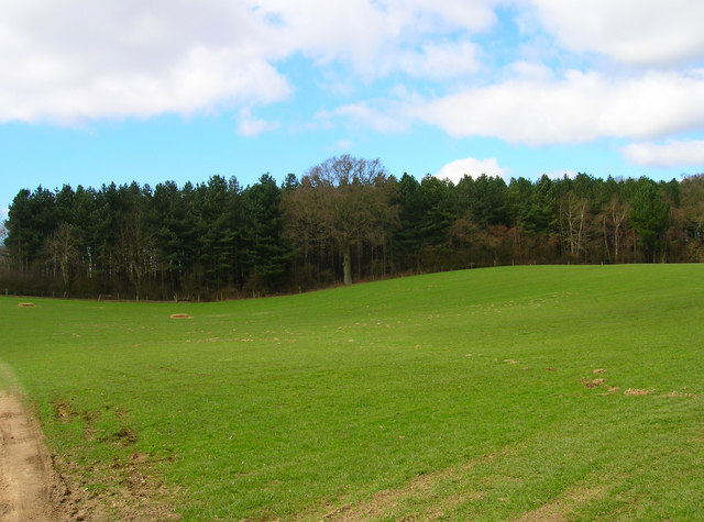 Basing Wood