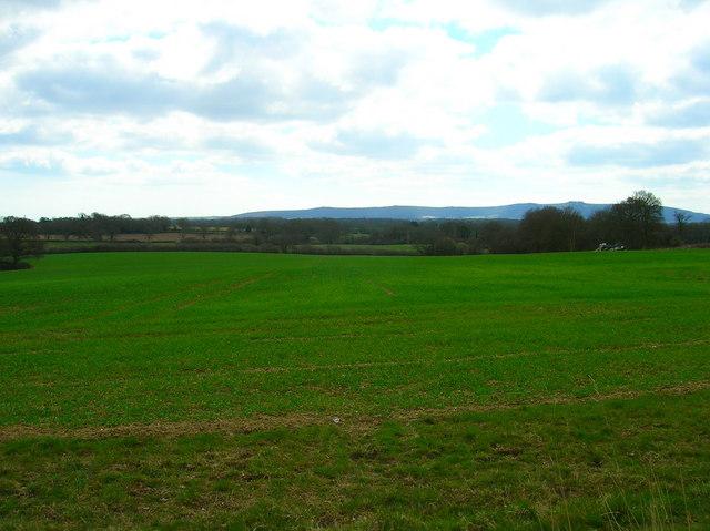 Field near Dalesdown School