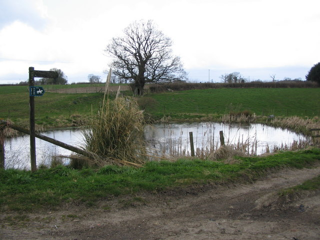 Duckpond at Baycliffe Farm