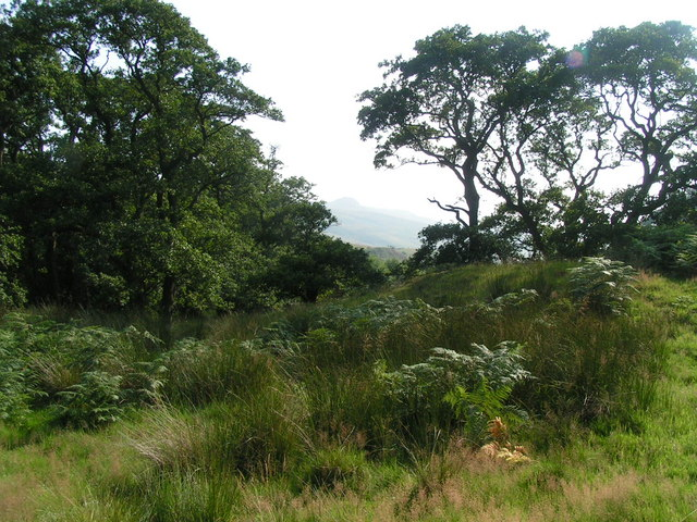 In the shelter of The Cheviot