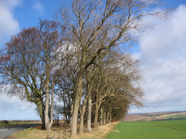 Trees on the B1253