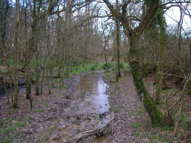 Footpath, Jack O'Lantern Wood