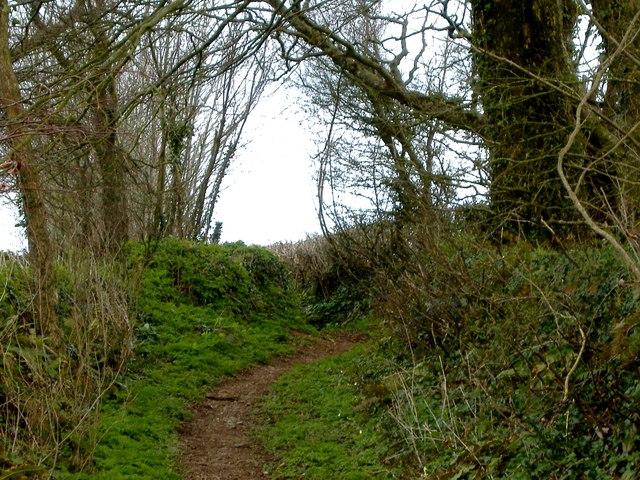 Lane near Cole Hill Plantation