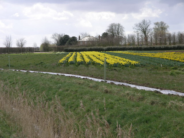 Daffs and Farm