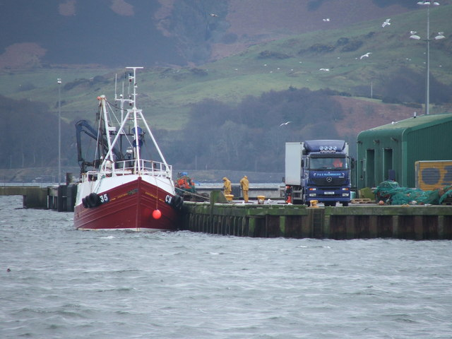 Unloading the catch at Campbeltown.