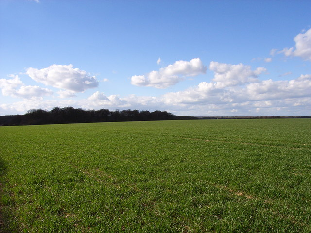 Farmland near Hyde Heath