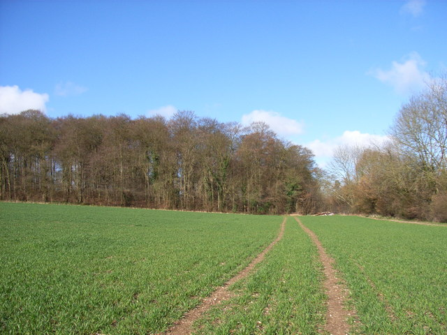 Farmland and Downham Grove