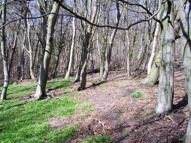 Tam's Wood