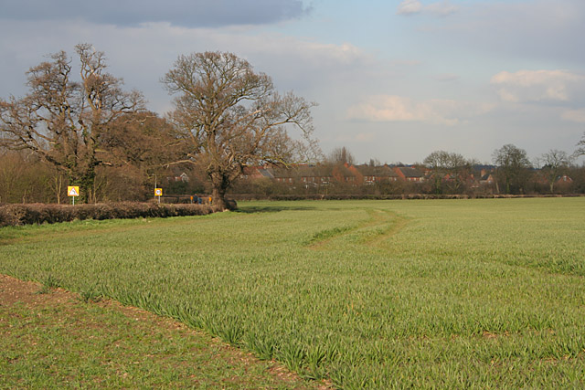Winter Wheat near Mountsorrel