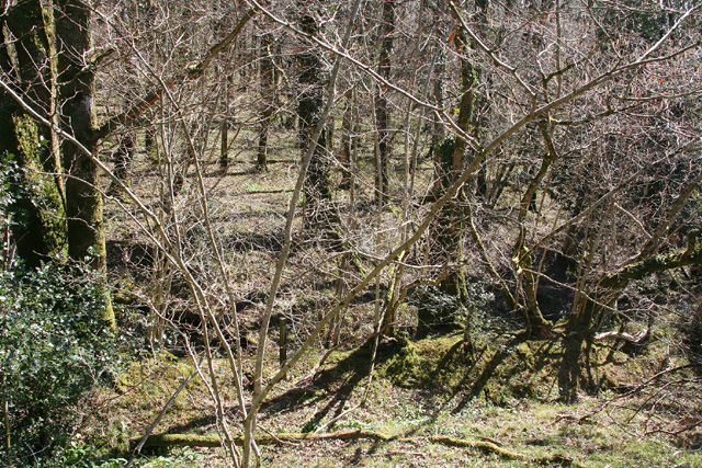 Dulverton: wood near Three Gates Cross