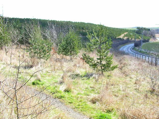 Plantation, Quarrington Hill