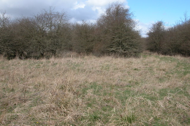 Rough grassland near Bledington