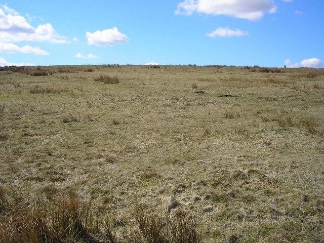 Rough grazing near Bordley