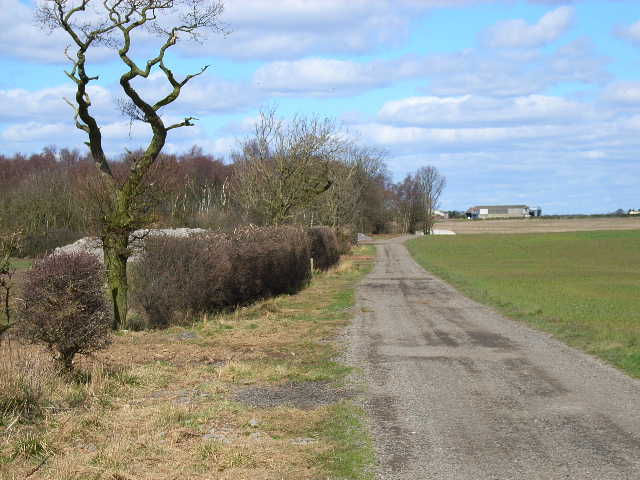 Farm road to Butterwick Moor Farm