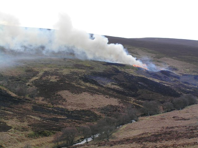 Baysdale - controlled moor burning