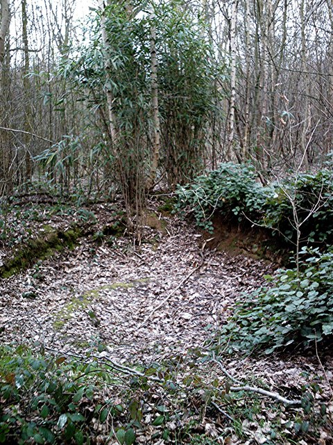 Hadleigh Gt. Wood - The Bomb Crater