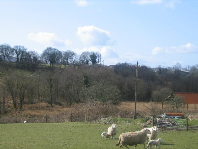 View Towards Henglyn Farm
