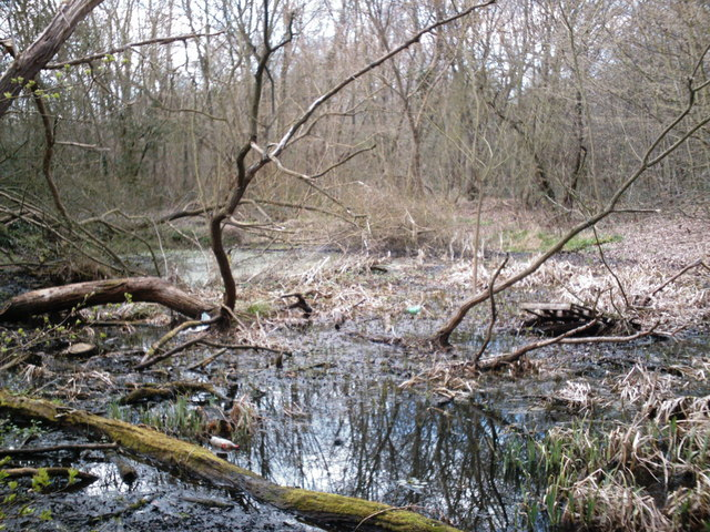 Marylands Wood - The Pond