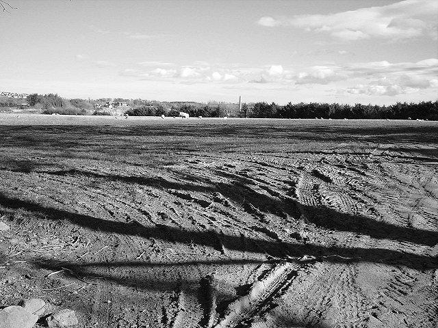 Rutted field