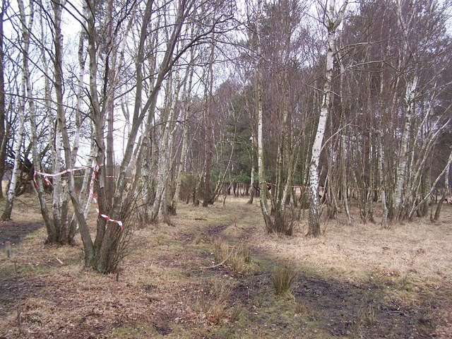 Woodland at Emer Bog