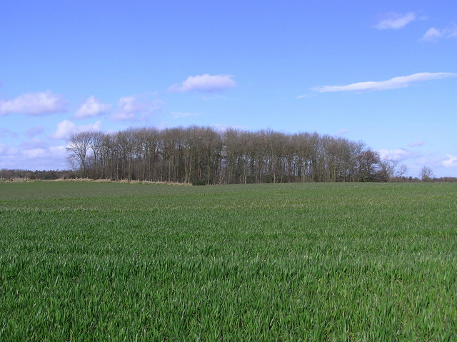 Copse: Nr. Back Lane.