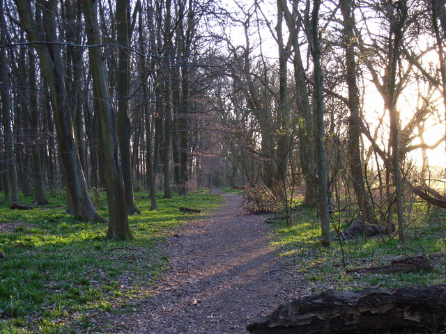 Woodland near Mop End
